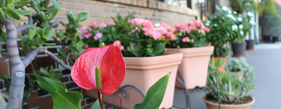 元代々木歯科医院表の花壇